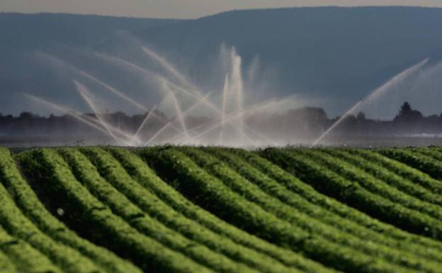 El agua abastecerá 600 hectáreas y beneficiará a 200 agricultores.